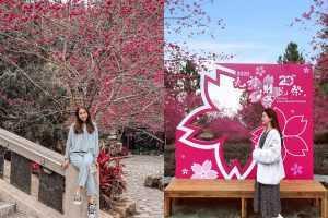 九族櫻花祭 | 2021春暖花開日月潭櫻花攻略 (1月底開始) - 最佳賞櫻時間、美拍地點、櫻花地圖、即時花況