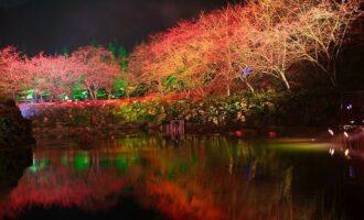 九族櫻花湖