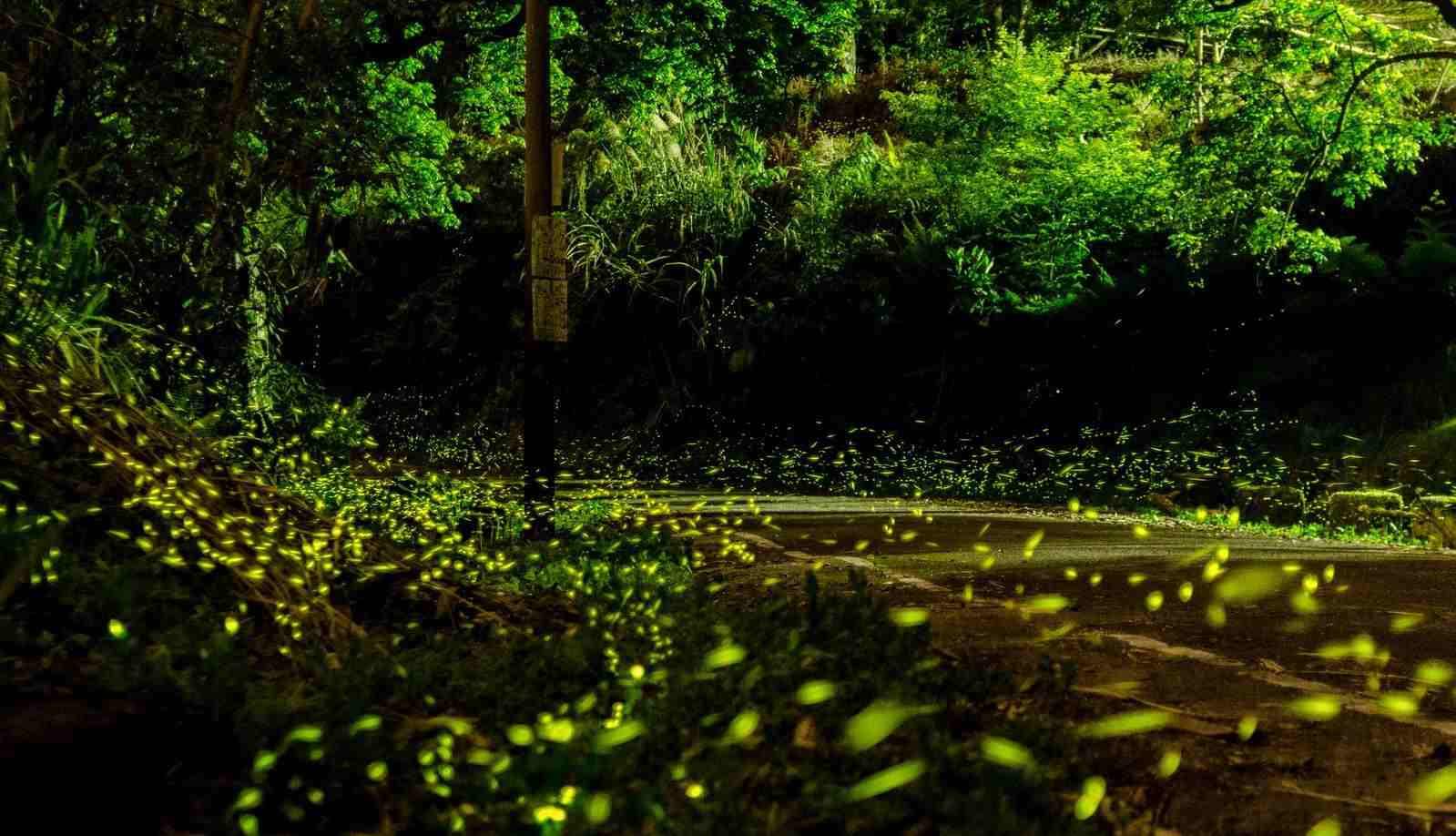 2020南投螢火蟲景點 ︱奧萬大森林遊樂區