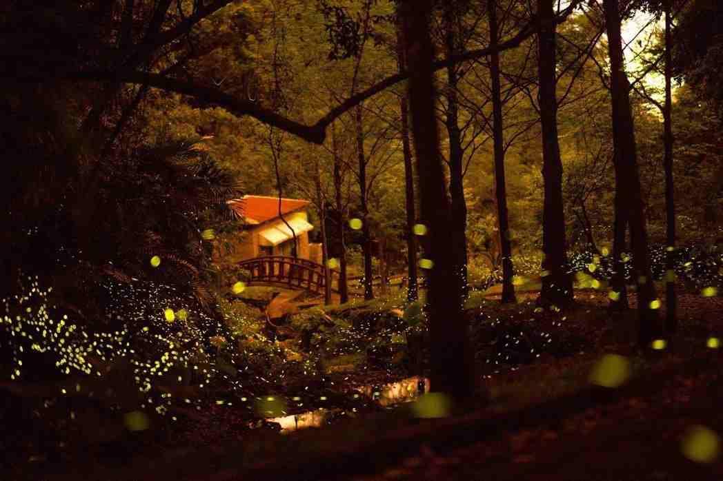 2020南投螢火蟲景點 ︱泰雅渡假村