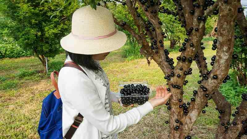 2020南投螢火蟲景點︱桃米休閒農業區