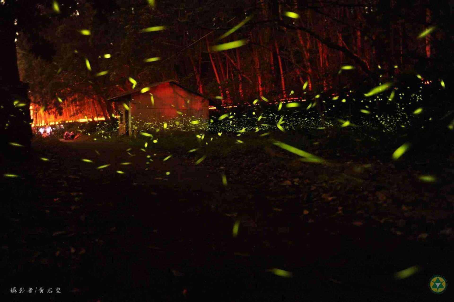 2020南投螢火蟲景點 ︱蓮華池-森林社區生態教育暨螢火蟲季