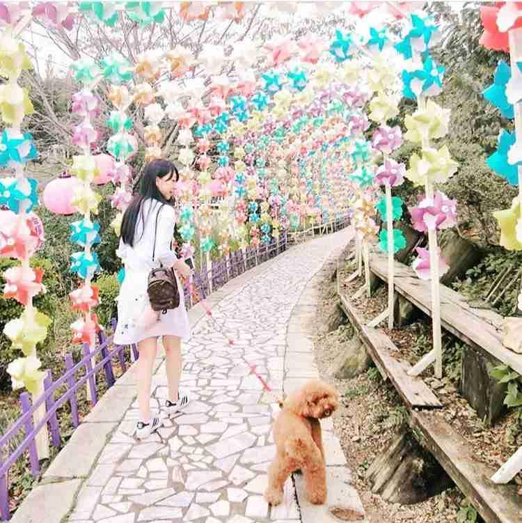 清境一日遊 | 小瑞士花園