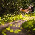 嘉義螢火蟲 | 推薦六間免費螢火蟲導覽體驗民宿 | 入住民宿帶你走進螢火蟲的異想世界(持續更新)