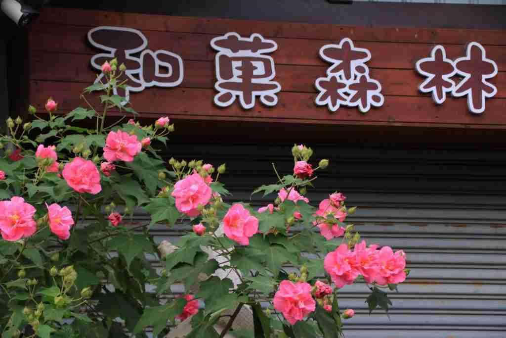 南投觀光工廠 和菓森林紅茶莊園