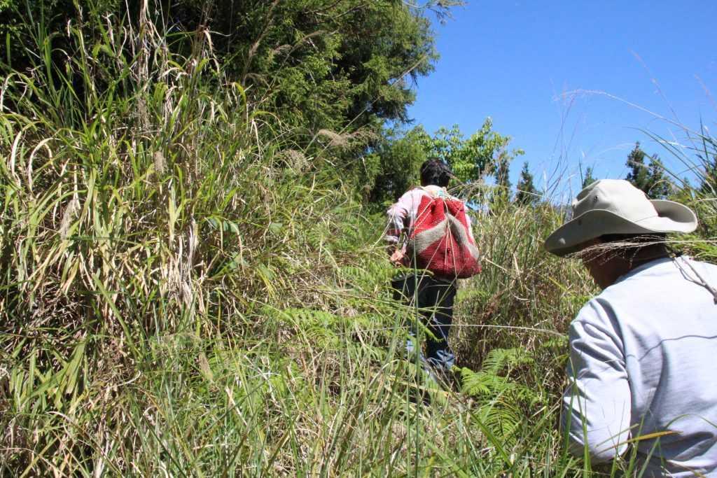 布農族文化之旅│布農獵人生態導覽