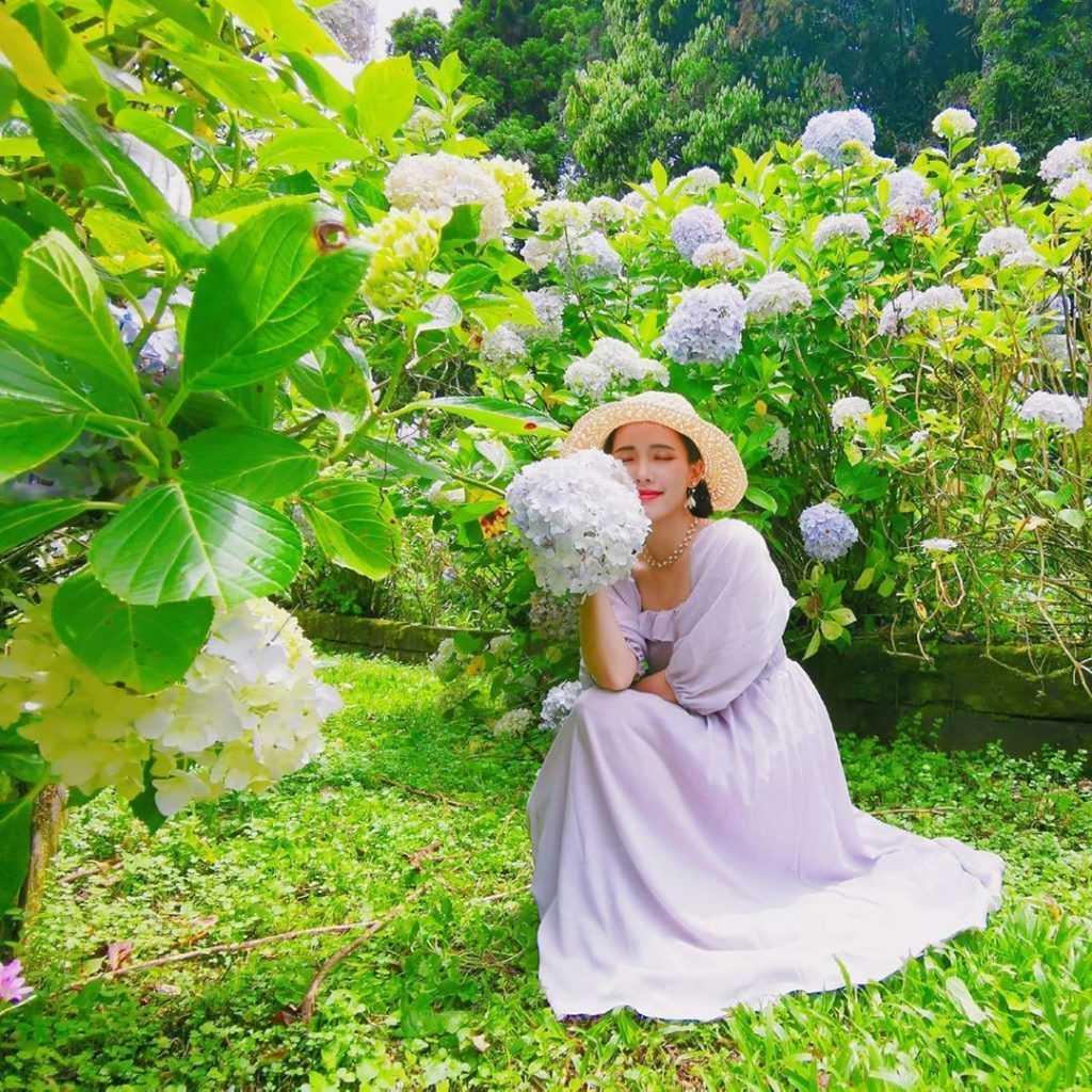 杉林溪繡球花季  如夢似幻的繡球花開了《花季時間、交通路線、門票價格》