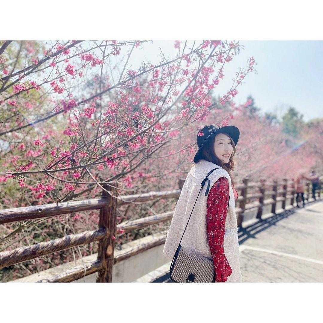 苗栗天氣 櫻花