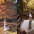 奧萬大國家森林遊樂區︱南投賞楓勝地︱四季皆美的「楓葉故鄉」!