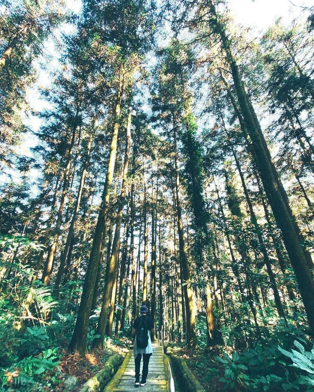 鳳凰谷鳥園生態園區 |天然森林區
