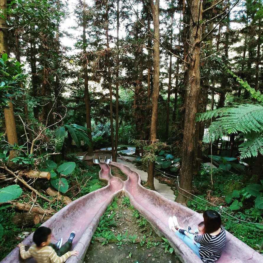 鳳凰谷鳥園生態園區 森林溜滑梯