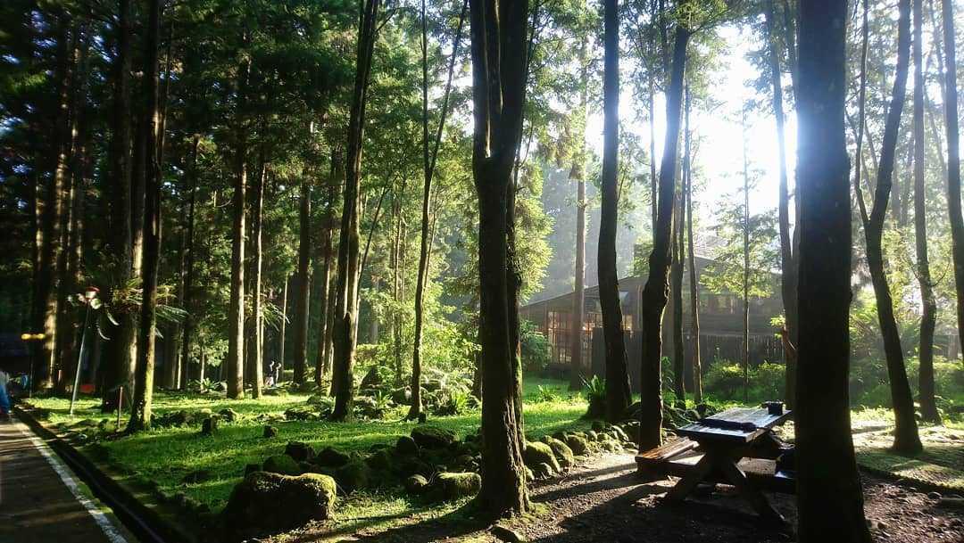 溪頭青年活動中心 |盡情呼吸芬多精,住在溪頭森林裡