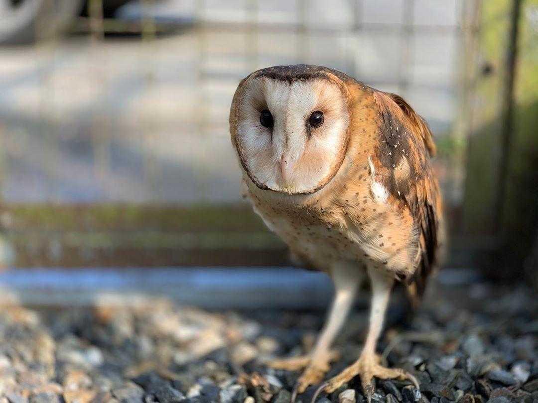 鳳凰谷鳥園生態園區 |草鴞