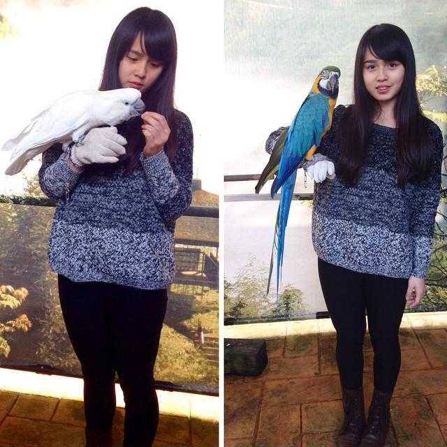 鳳凰谷鳥園生態園區 |鸚鵡