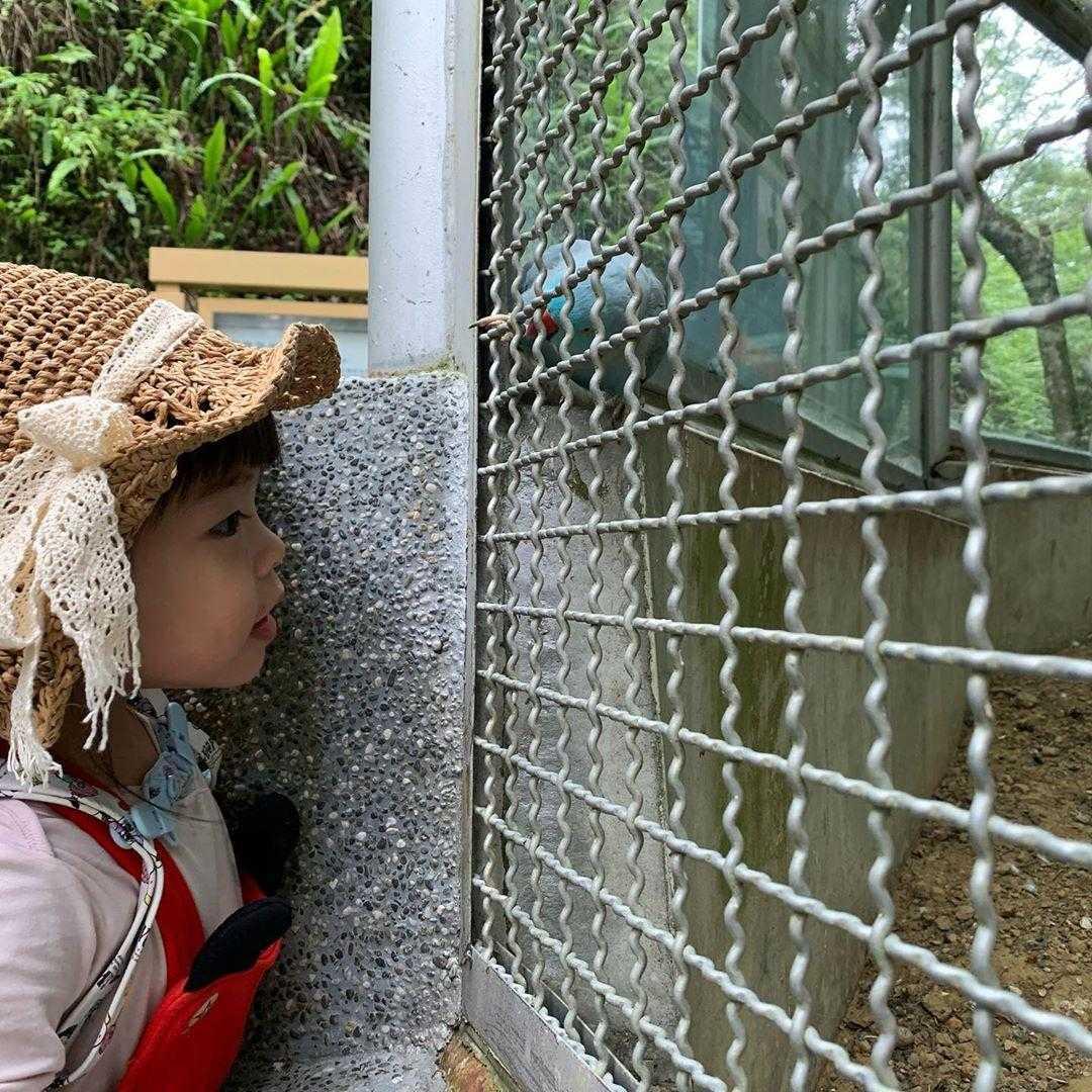 鳳凰谷鳥園生態園區|親禽園