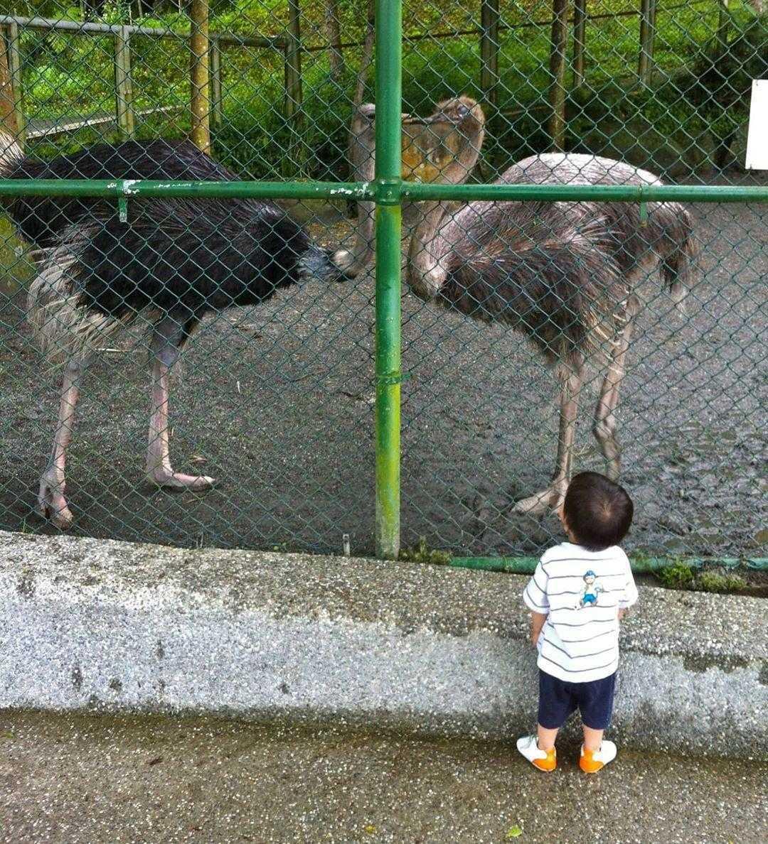 鳳凰谷鳥園生態園區 |鴕鳥