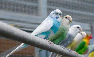 鳳凰谷鳥園1