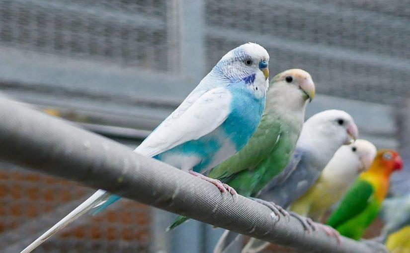 鳳凰谷鳥園生態園區 |多達300種鳥禽,免費遊園一整天!親子賞鳥、步道、森林溜滑梯一次玩過癮~