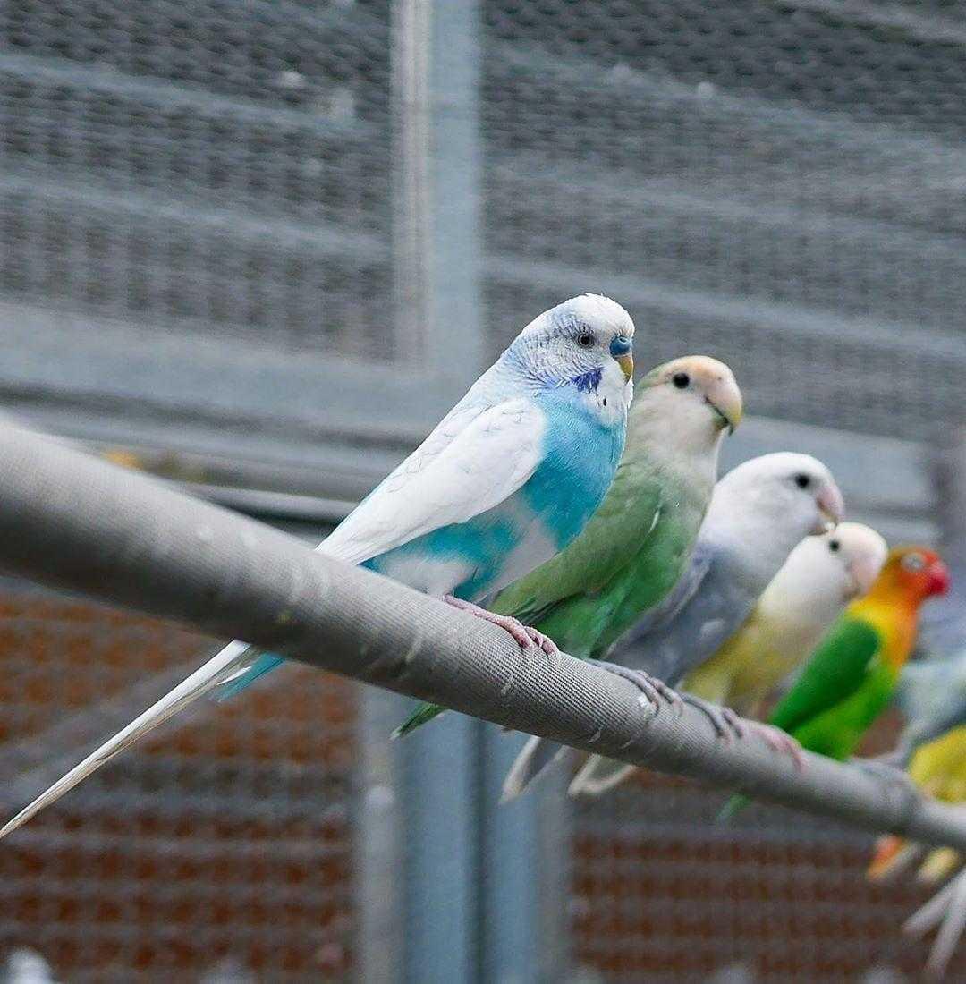 鳳凰谷鳥園生態園區|鸚鵡
