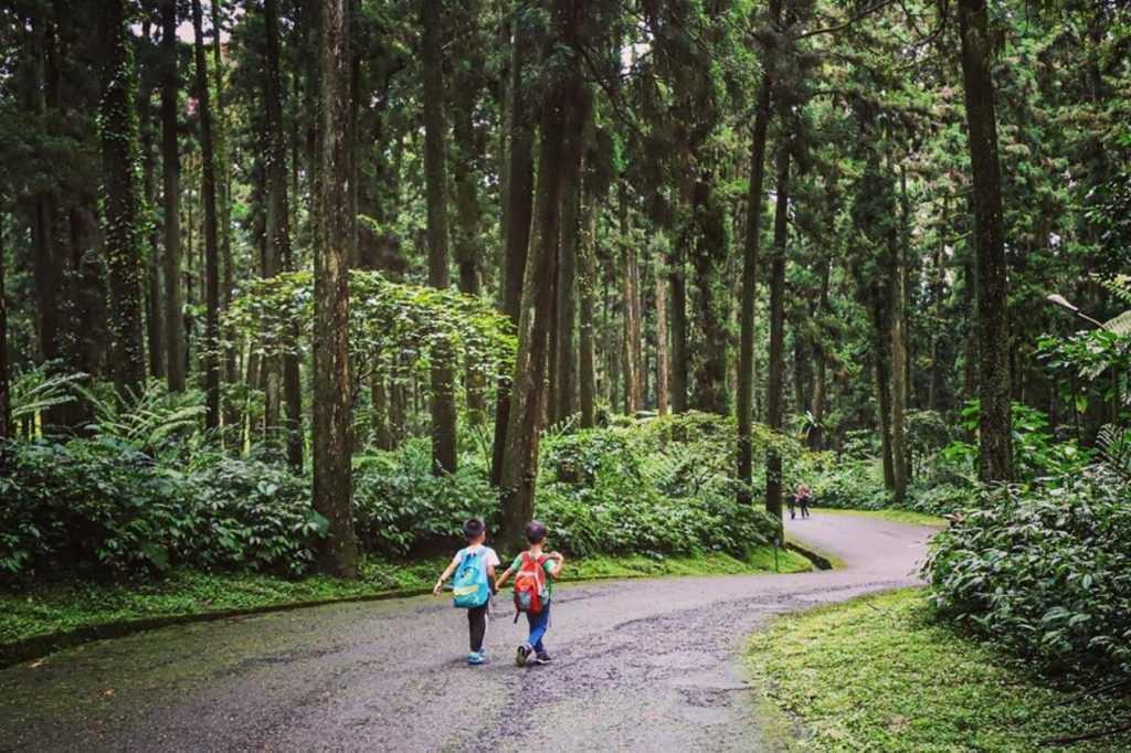 溪頭自然教育園區