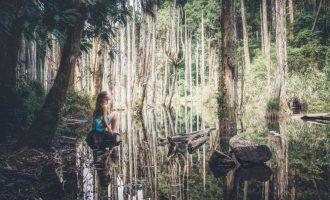 溪頭忘憂森林