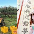 新竹行程 | 新竹玩什麼?新竹熱門手作體驗,自己動手做的最好玩:採果採茶、擂茶DIY、文創手作體驗