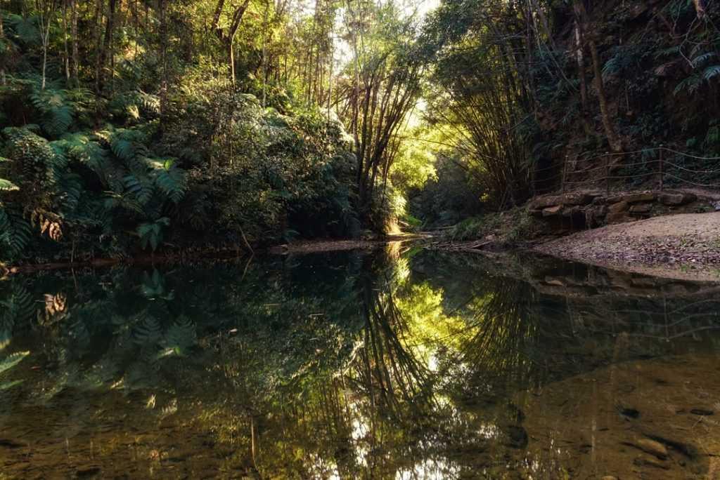 南投景點推薦 :澀水森林步道