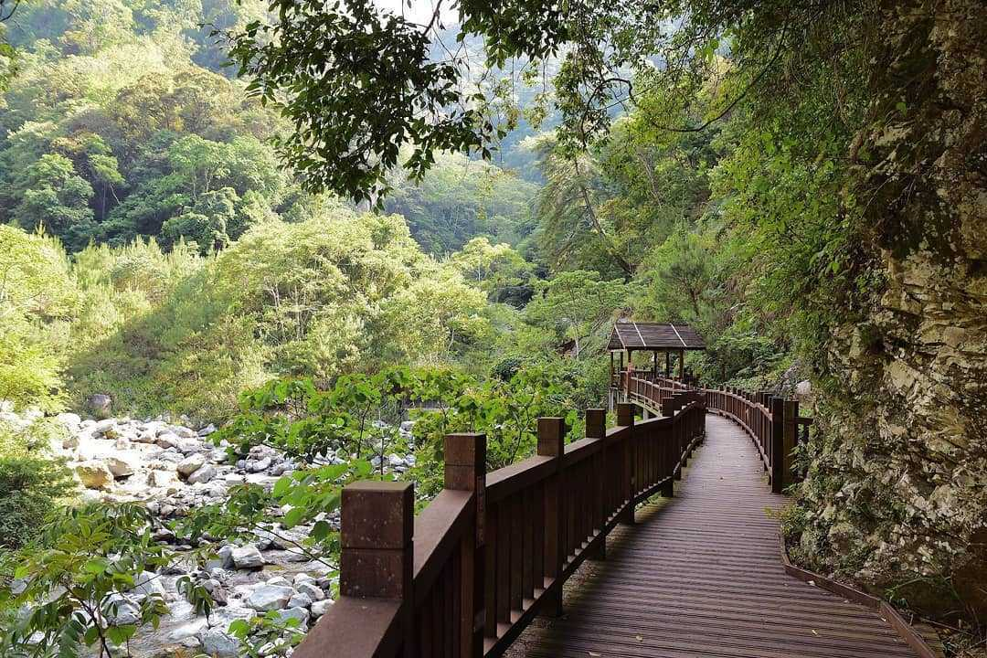 八仙山國家森林遊樂區 |最靠近谷關溫泉的森林遊樂區、中部親子旅遊一日遊行程推薦