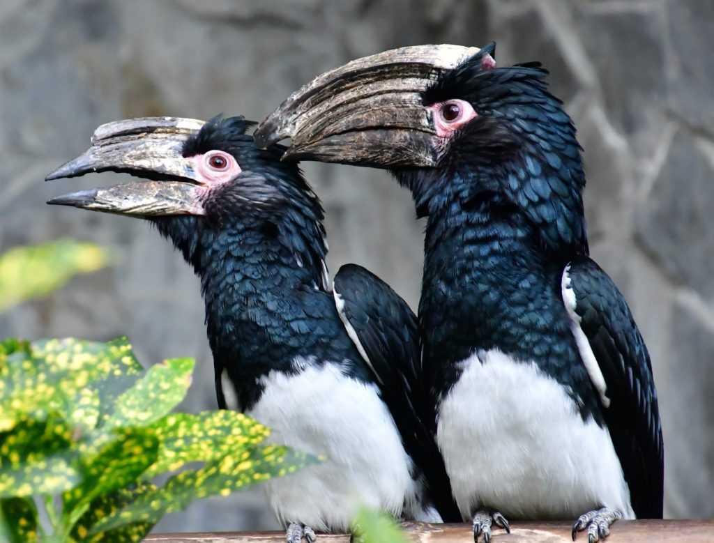 溪頭景點:鳳凰谷鳥園生態園區