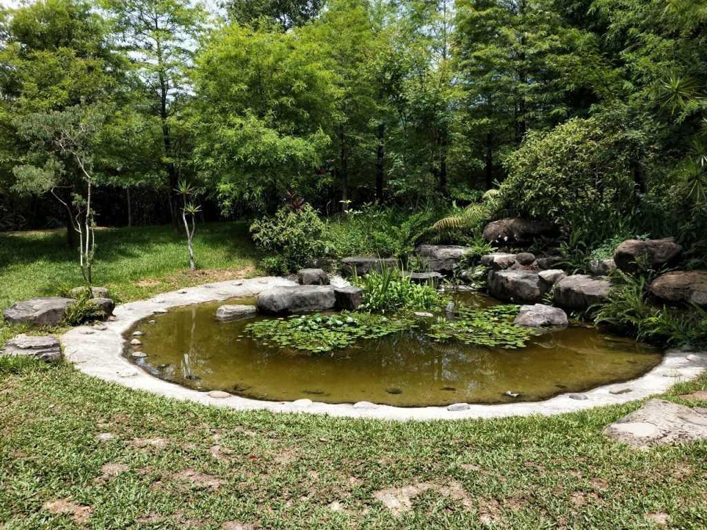 「貓教堂」一旁的水池綠意盎然