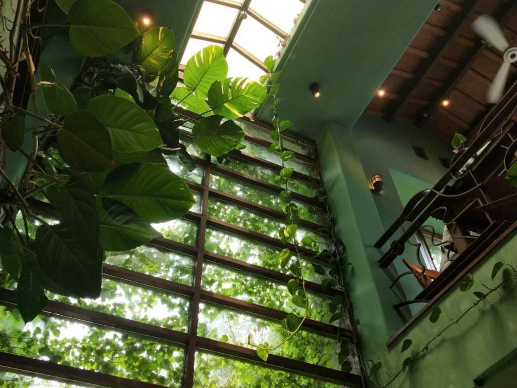 鳥vs人 店內氛圍非常獨特,滿滿的綠色植物