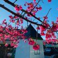 清境國民賓館 |距離清境農場最近、最方便、CP值也最高的清境住宿