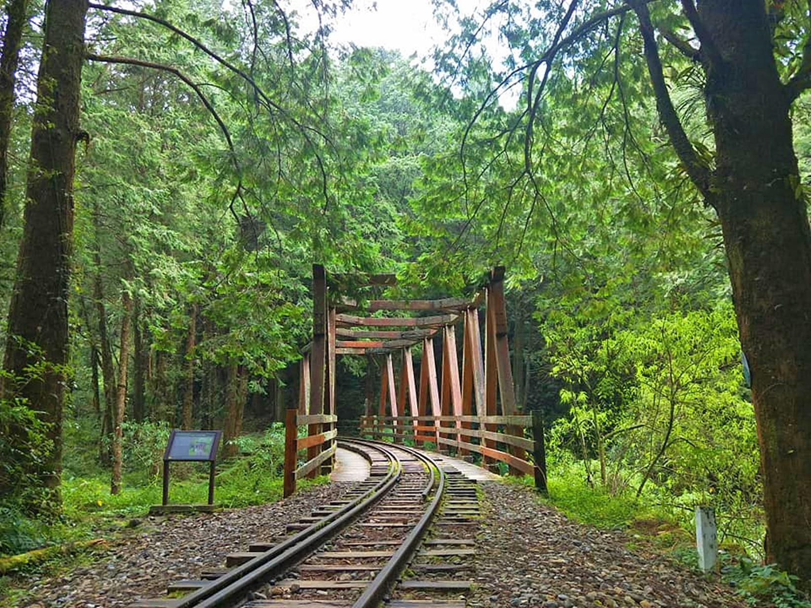 南部森林遊樂區推薦 |台灣南部 5 座森林遊樂區根本是天然的活博物館,散步森林步道中享受芬多精