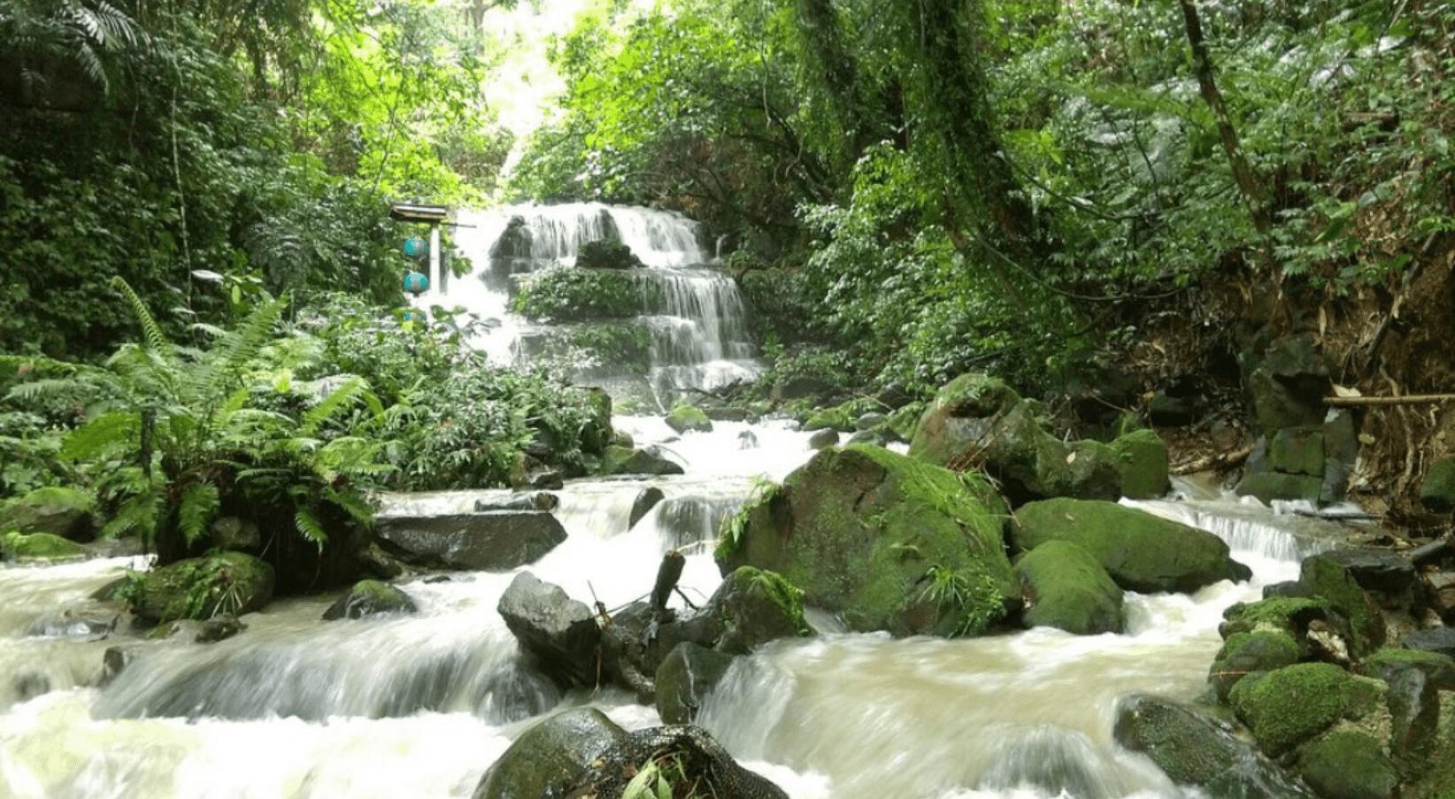 阿里山黃頭鷺季 飛瀑