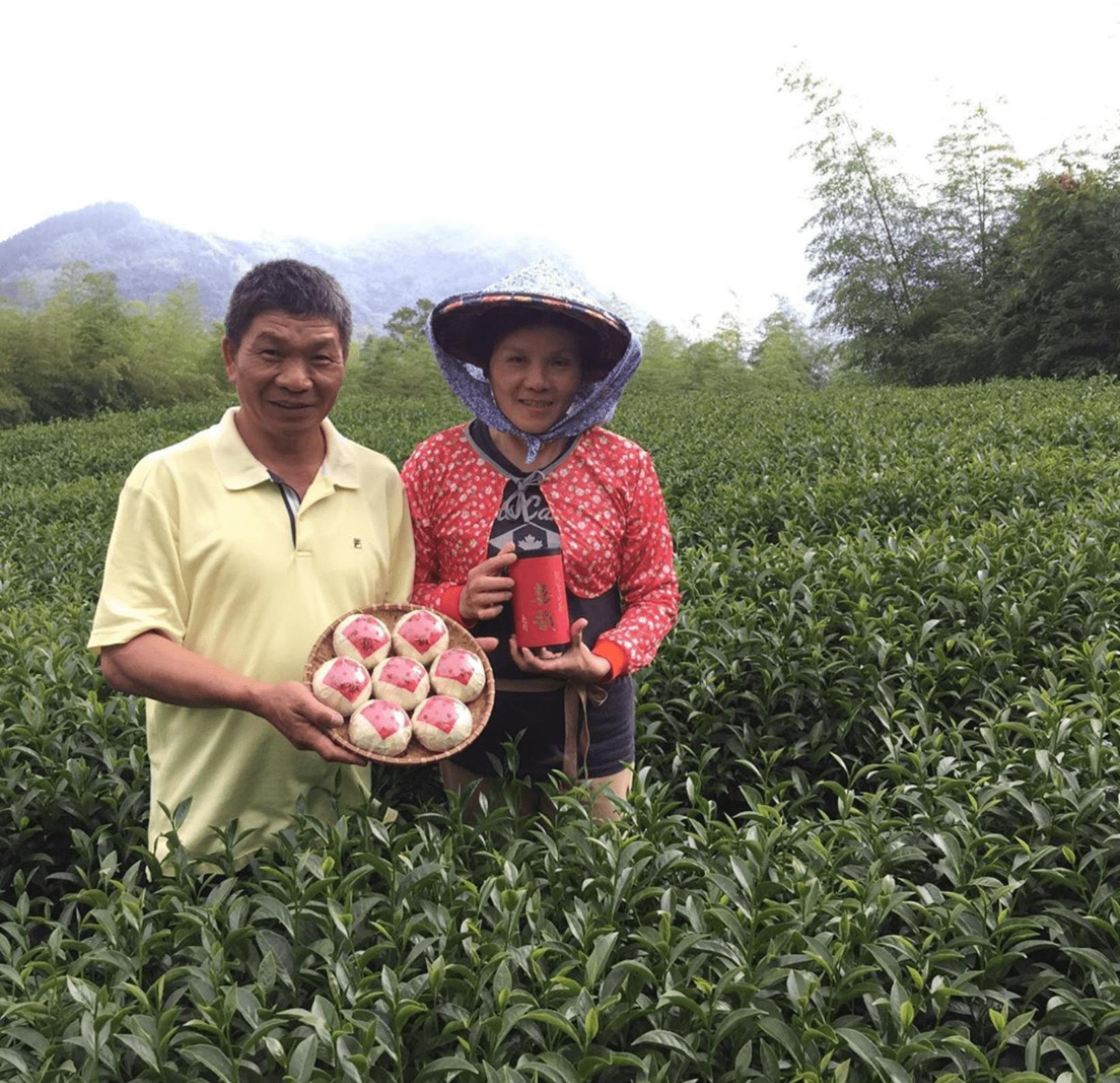 旭隆製茶團茶體驗