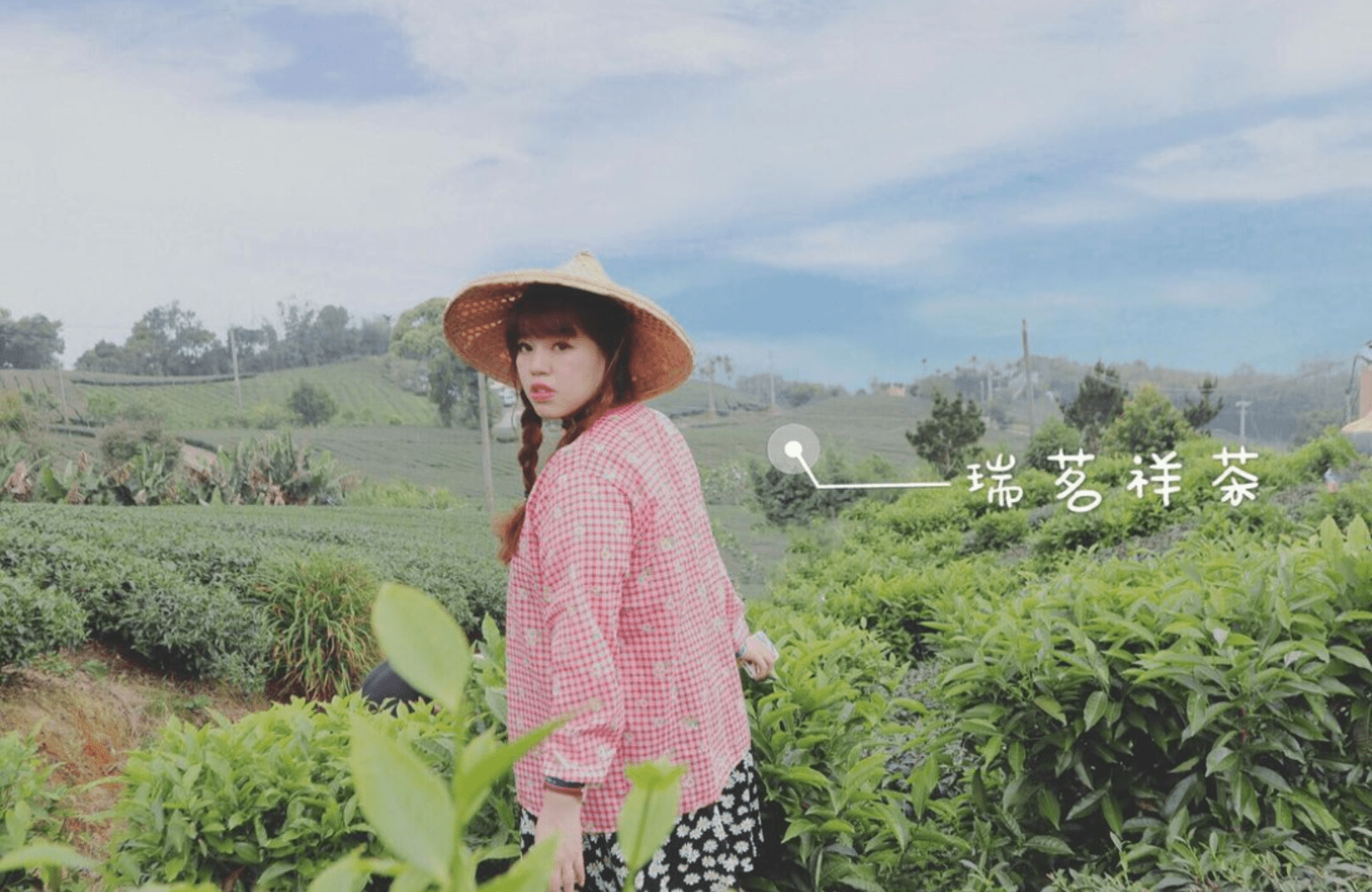 瑞茗祥採茶製茶體驗