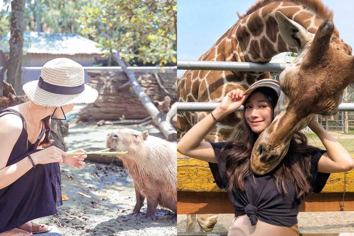 台南頑皮世界野生動物園|台南打卡景點|零距離的水豚君、長頸鹿、草泥馬與復古小遊樂園