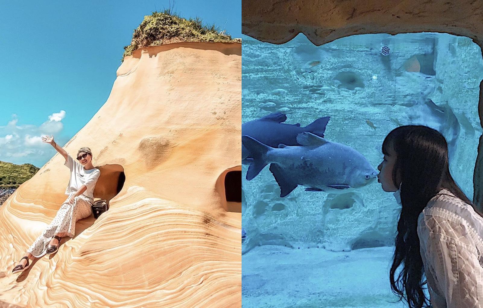 新北野柳海洋世界 | 小小海洋探險家【海豚表演秀、水族館、優惠票】台北景點推薦