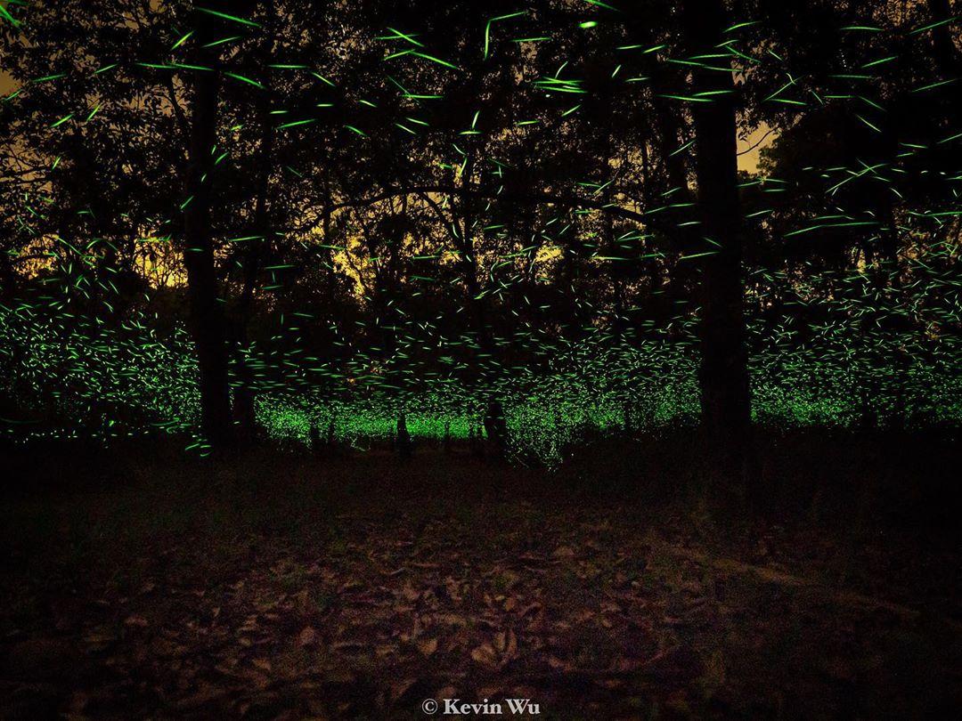 東部森林遊樂區 |宜花東5個森林系景點推薦,最親近大自然的郊外景區