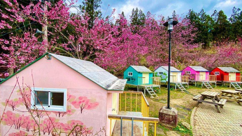 武陵農場露營 B區小木屋