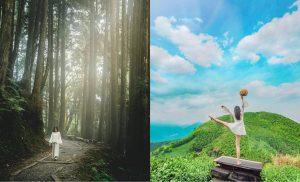 嘉義阿里山步道|推薦《10條阿里山熱門步道》享受森林芬多精,夢幻竹林、高山茶園、落日夕陽、日出美景