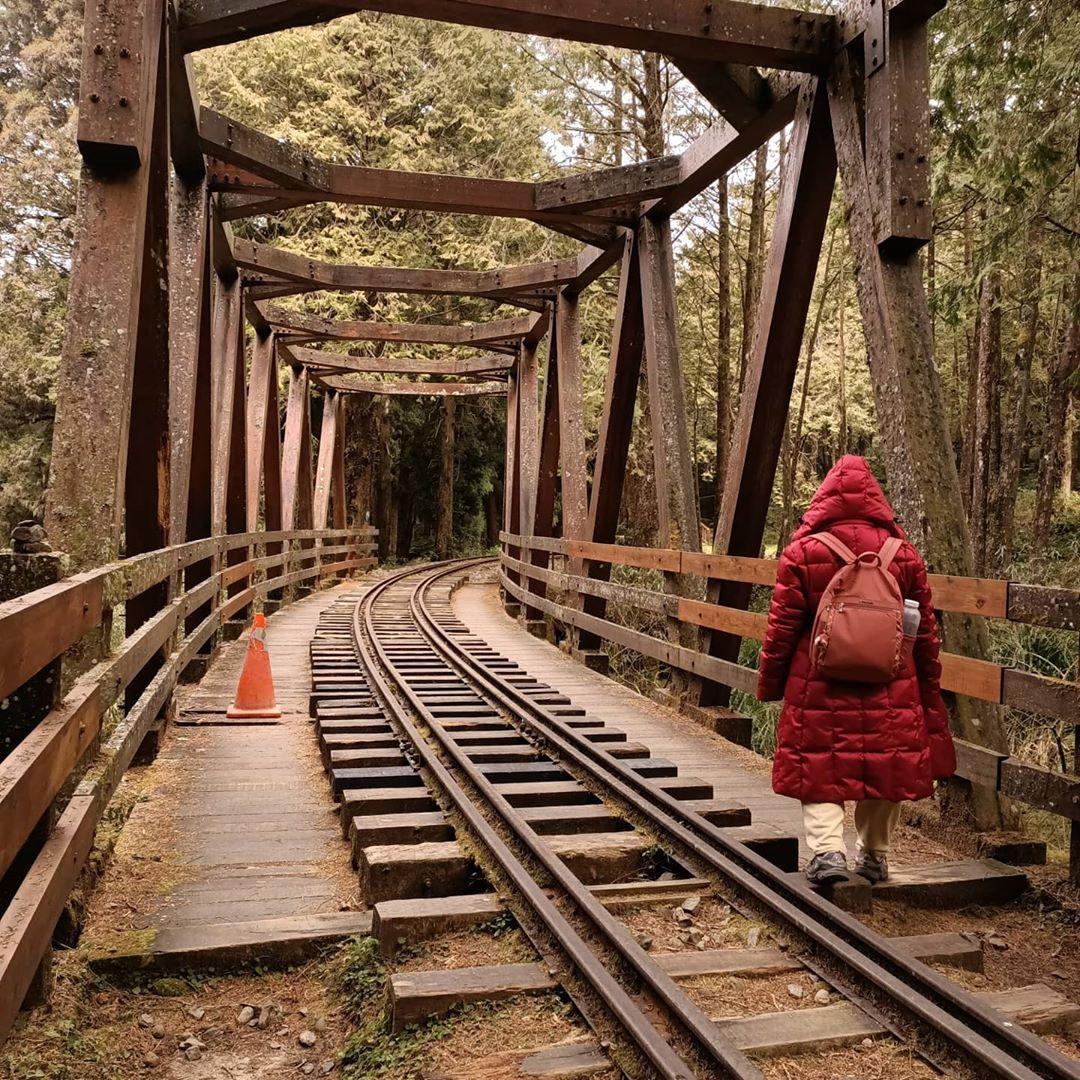 阿里山森林遊樂區景點推薦 水山巨木