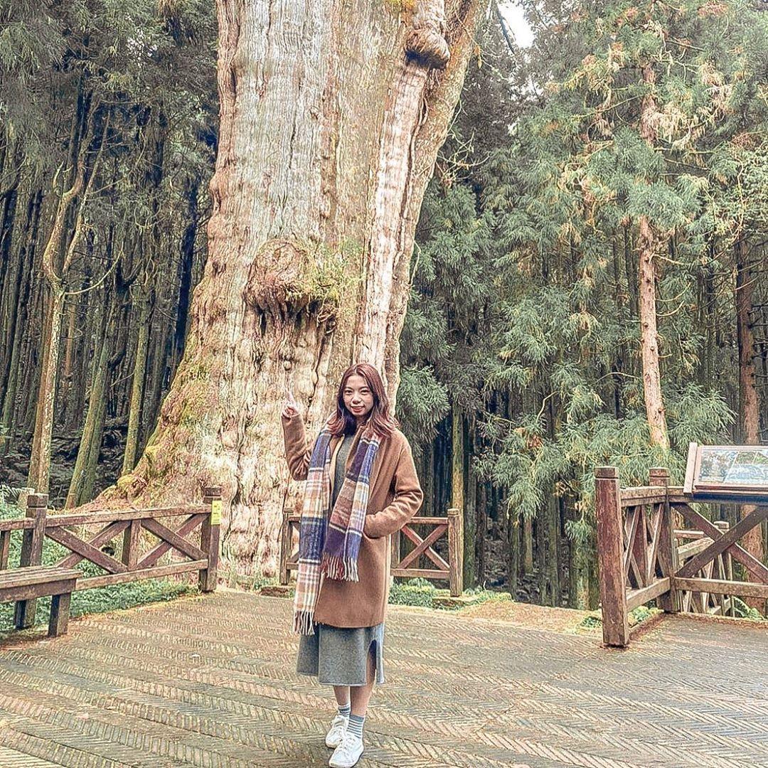 阿里山森遊區景點推薦 |#1 水山巨木