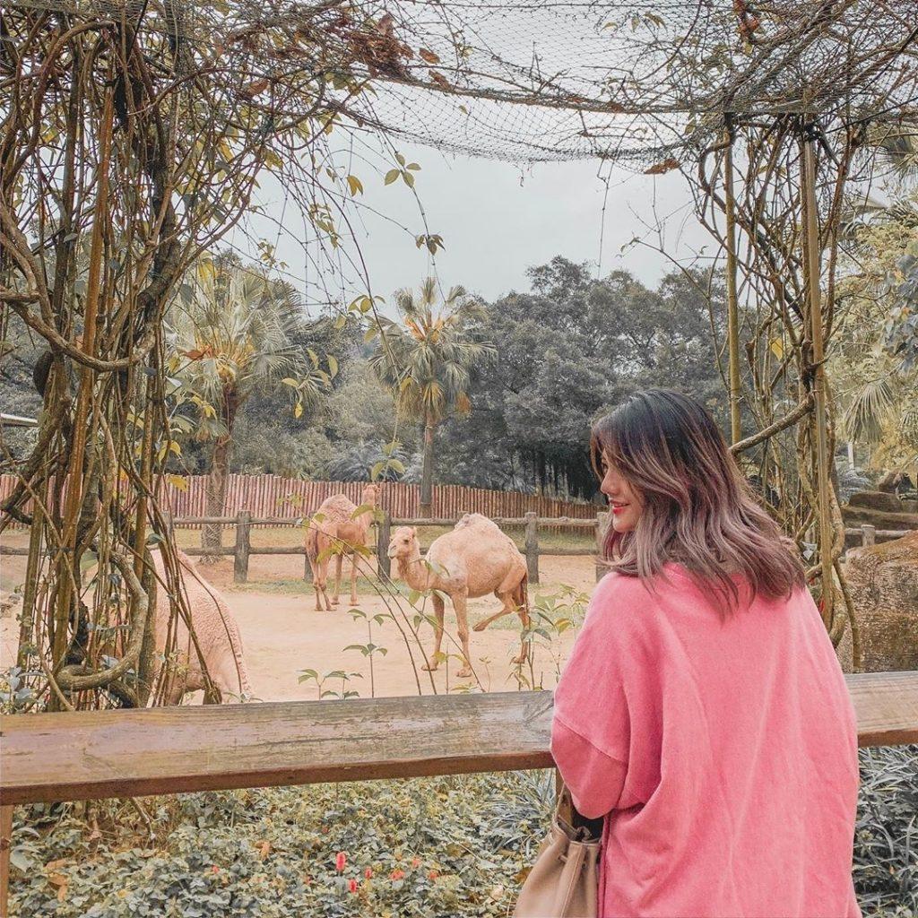 動物園,台北動物園,台北市立動物園,駱駝
