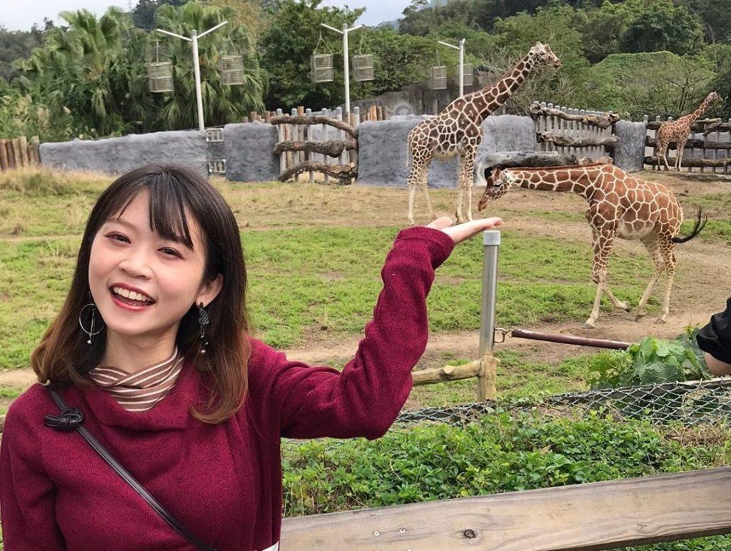 動物園,台北動物園,台北市立動物園,長頸鹿