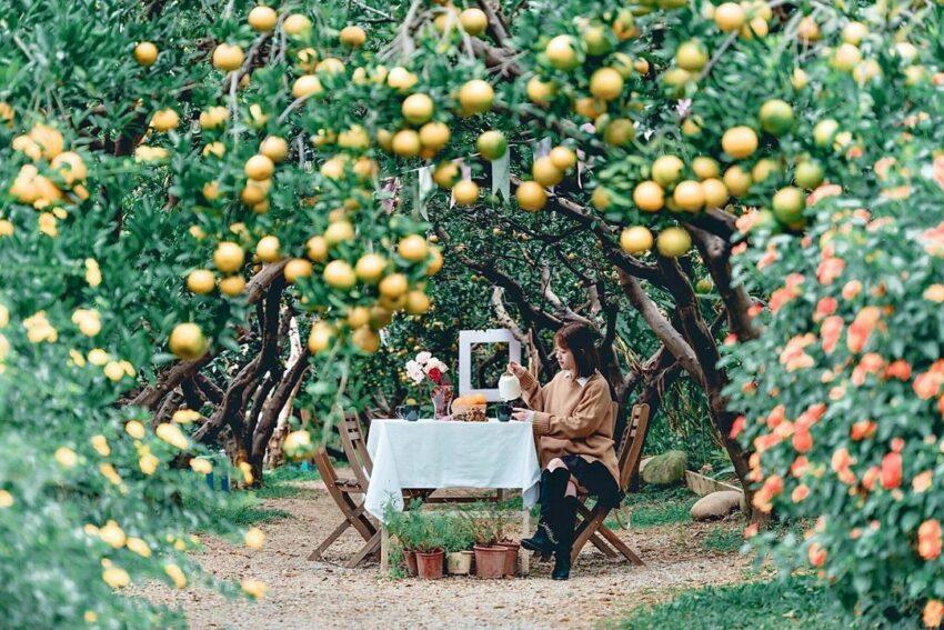 苗栗景觀餐廳 |橙香森林