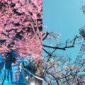 2021阿里山櫻花季【阿里山賞櫻攻略】推薦必去拍照景點、櫻花花況、賞櫻路線、交通懶人包