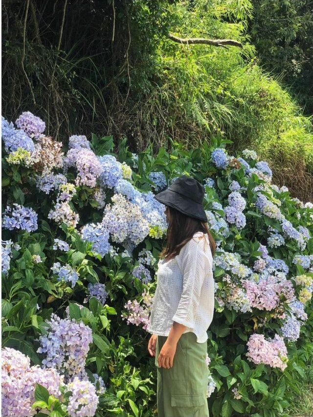 武陵農場露營 繡球花